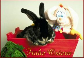 http://www.geburtstagskarten-kostenlos.de/osterkarten-ausdrucken/ostern-25.jpg